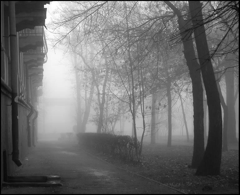 Окутано туманами январскими Полгорода, но видится полмира. Холодными
