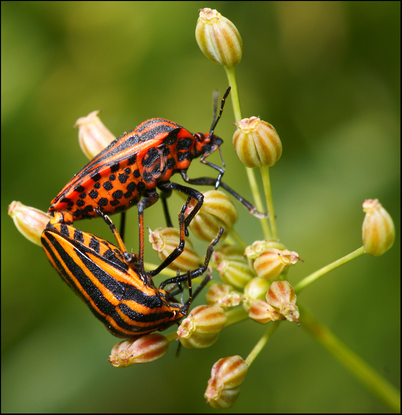 Красивые фотографии насекомых DiddlyBop.