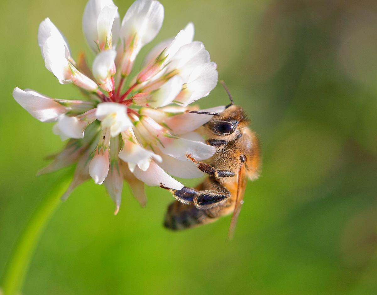 как привлеч полезных насекомых