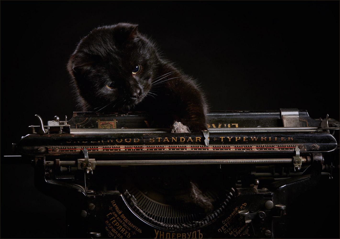 Канцелярский кот